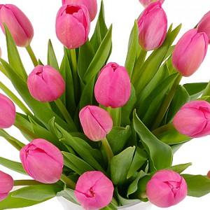 8387-twenty-pink-tulips